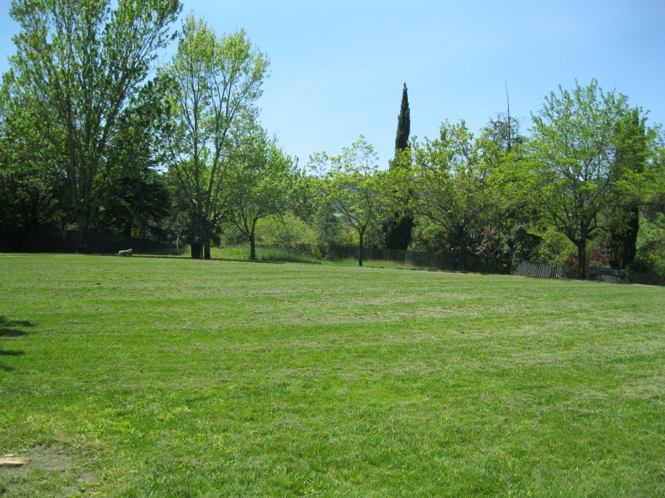 A grass picnic area of a city park